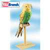 Perfect Polly Parakeet