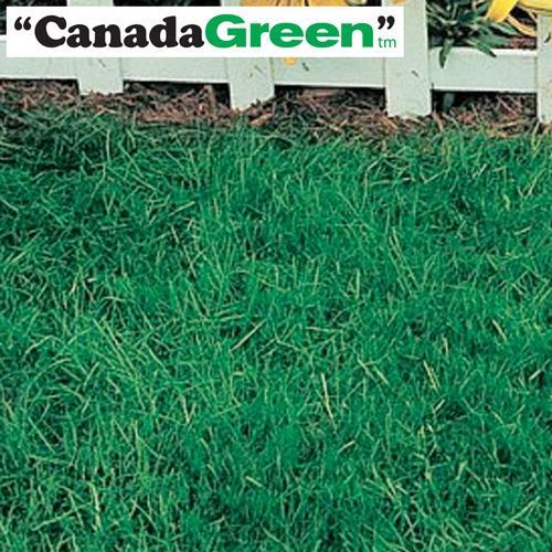 '6lbs. Canada Green Grass Seed'
