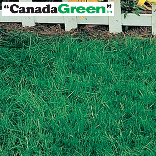 6lbs. Canada Green Grass Seed